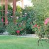 Budowa ogrodów od podstaw