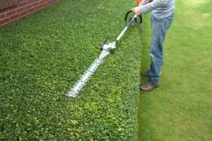 Przycinanie ywop ot w artmon ogrody for Tarif entretien espace vert copropriete